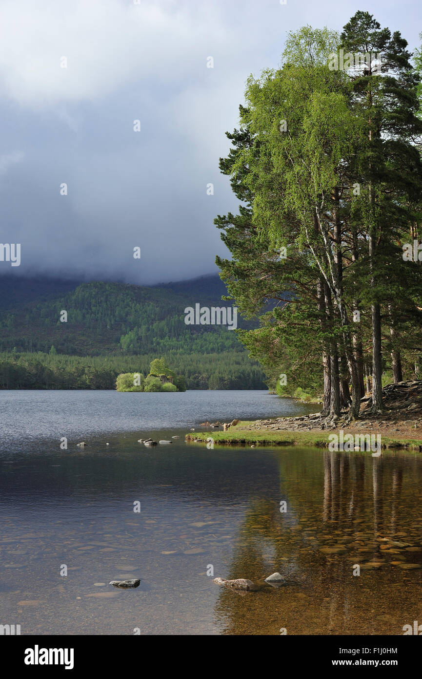 Scots pine woodland around Loch an Eilein in Rothiemurchus, remnant of the Caledonian Forest in the Cairngorms NP, - Stock Image