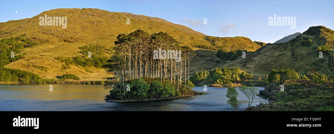Eilean na Moine islet covered with Scots pines in Loch Eilt along the Road to the Isles, Lochaber, West Highlands, - Stock Image