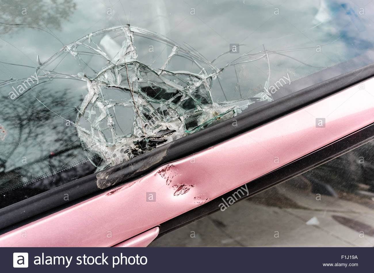 Broken car front glass from falling tree branch closeup - Stock Image
