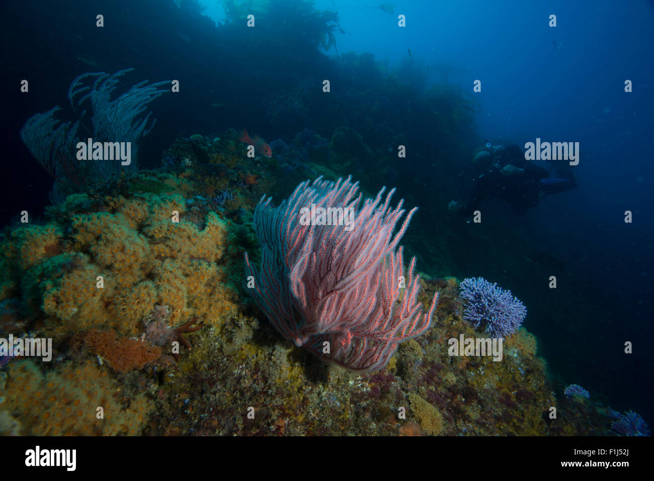 A marine protected area near Catalina Island, California - Stock Image