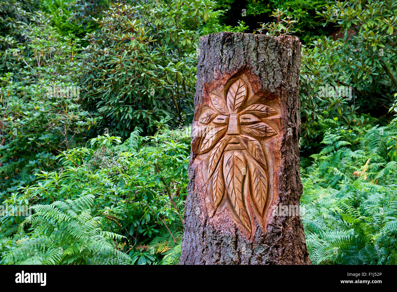 Tree stump carved with face of green man, in the gardens of Muncaster Castle, West Cumbria, England UK - Stock Image