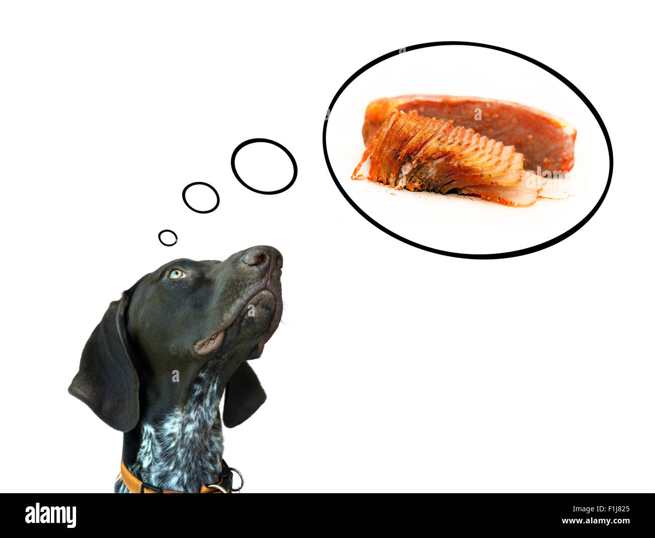 Conceptual image of german short hair pointer dreaming about delicious surlion - Stock Image