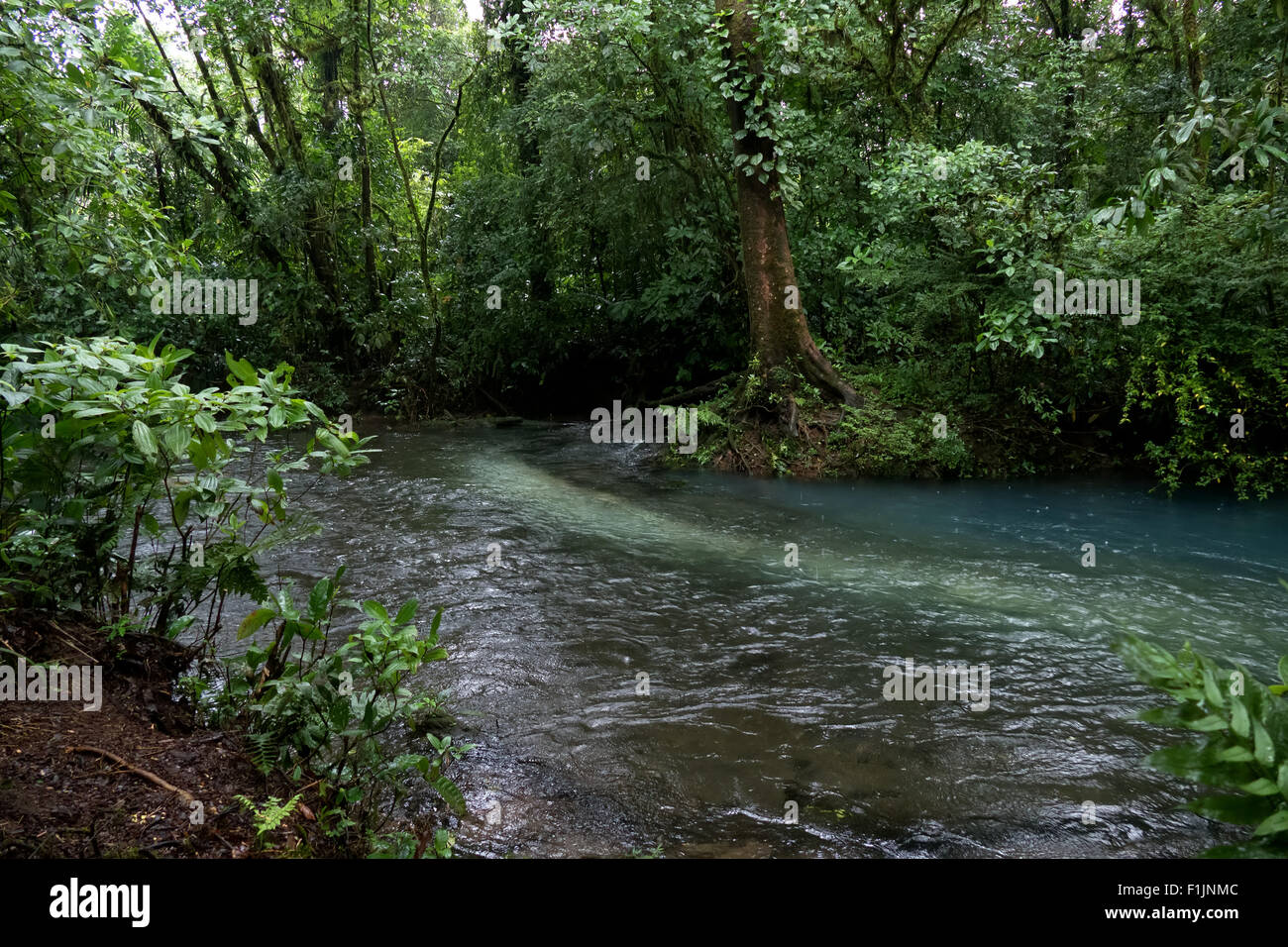 Tenorio Volcano National Park, Costa Rica, Central America. Jungle, forest, rainforest, nature conservation, river, - Stock Image