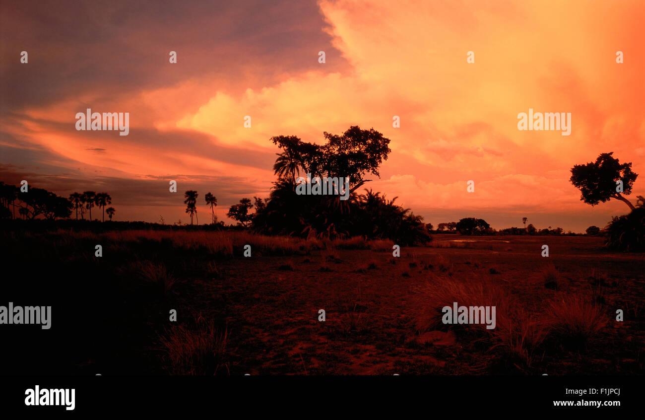 Silhouette of Landscape at Sunset Okavango, Botswana, Africa - Stock Image