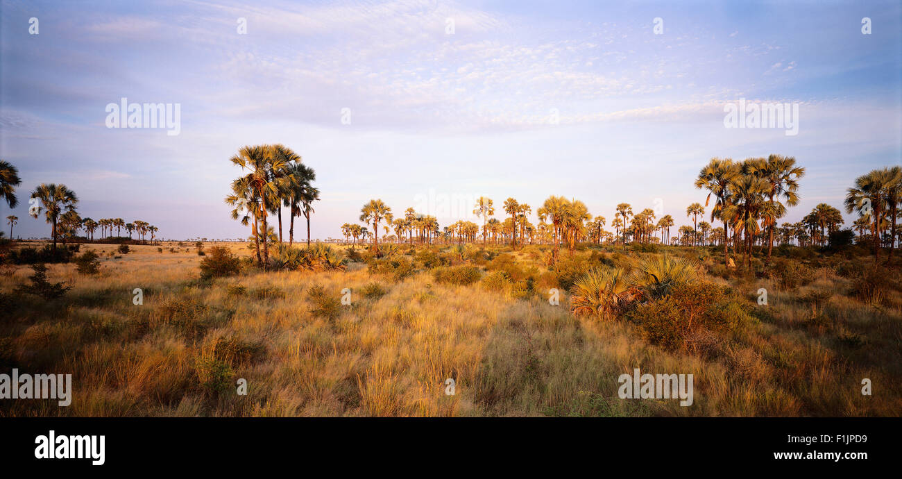 Grasslands Okavango Delta, Botswana, Africa Stock Photo