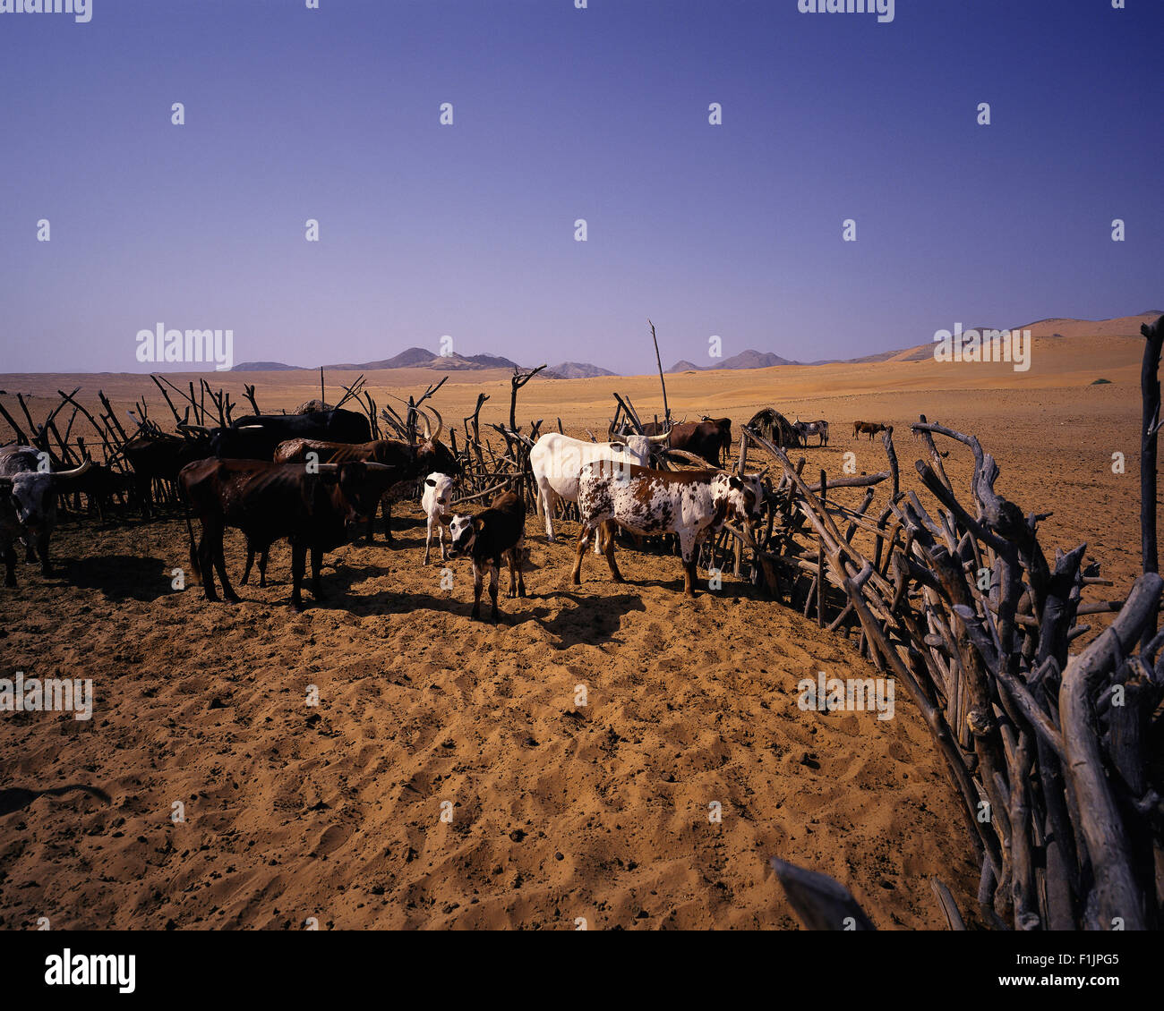 Cattle Kraal in Kunene River Region, Namibia, Africa Stock Photo