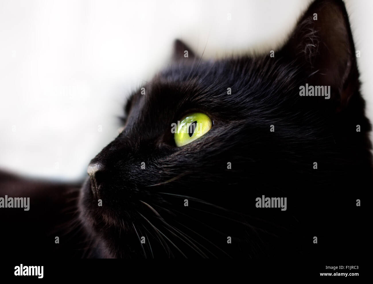 Close up portrait of black cat with green eyes - Stock Image