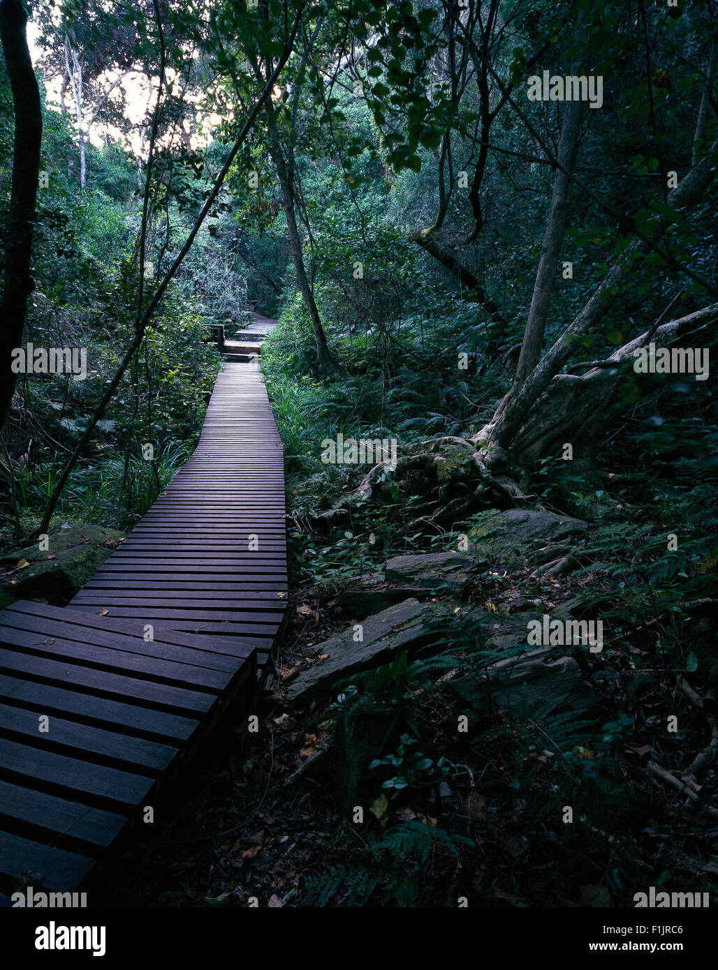 Wooden Walkway through Forest Storm's River Mouth, South Africa - Stock Image