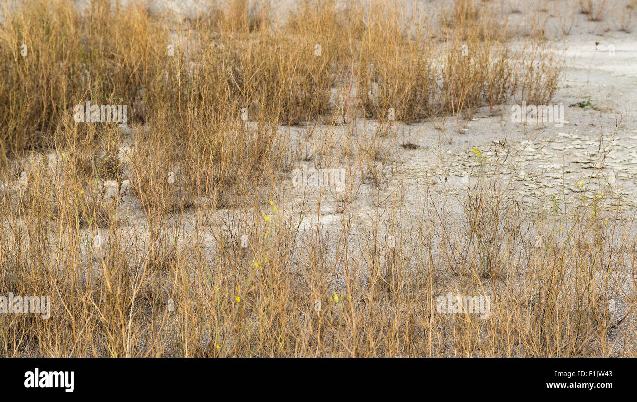 detail shot showing a arid environment with sere plants and dry earth - Stock Image