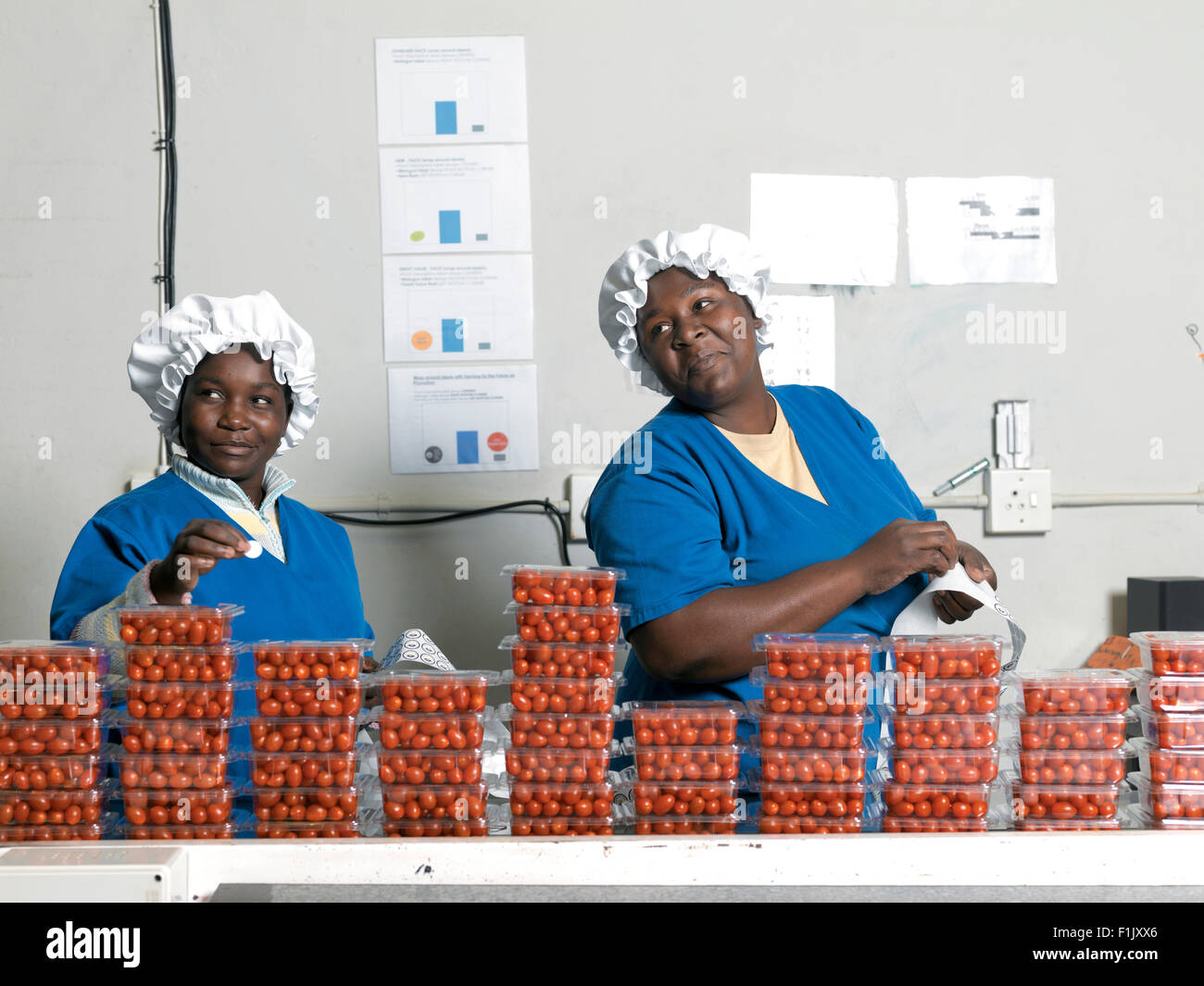 Labeling of packaged baby tomatoes, LA Visage & Seun - Stock Image