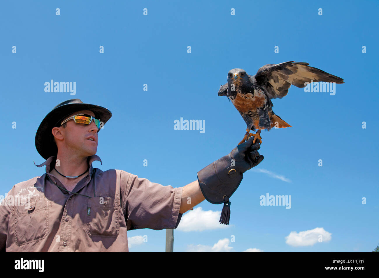 Falconer - Stock Image