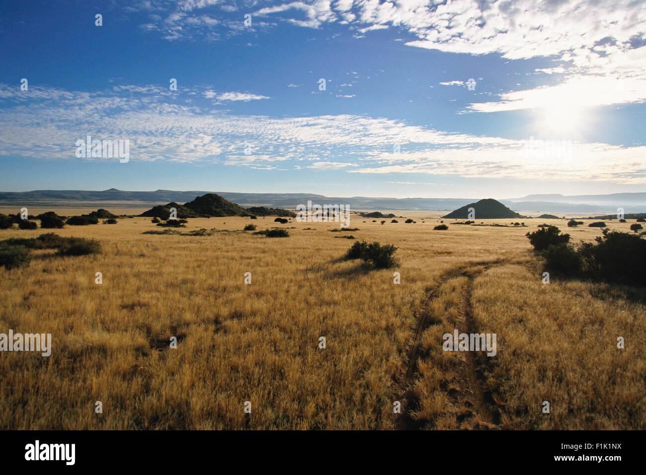 Tire Tracks, Karoo, Western Cape, Cape Province, South Africa - Stock Image