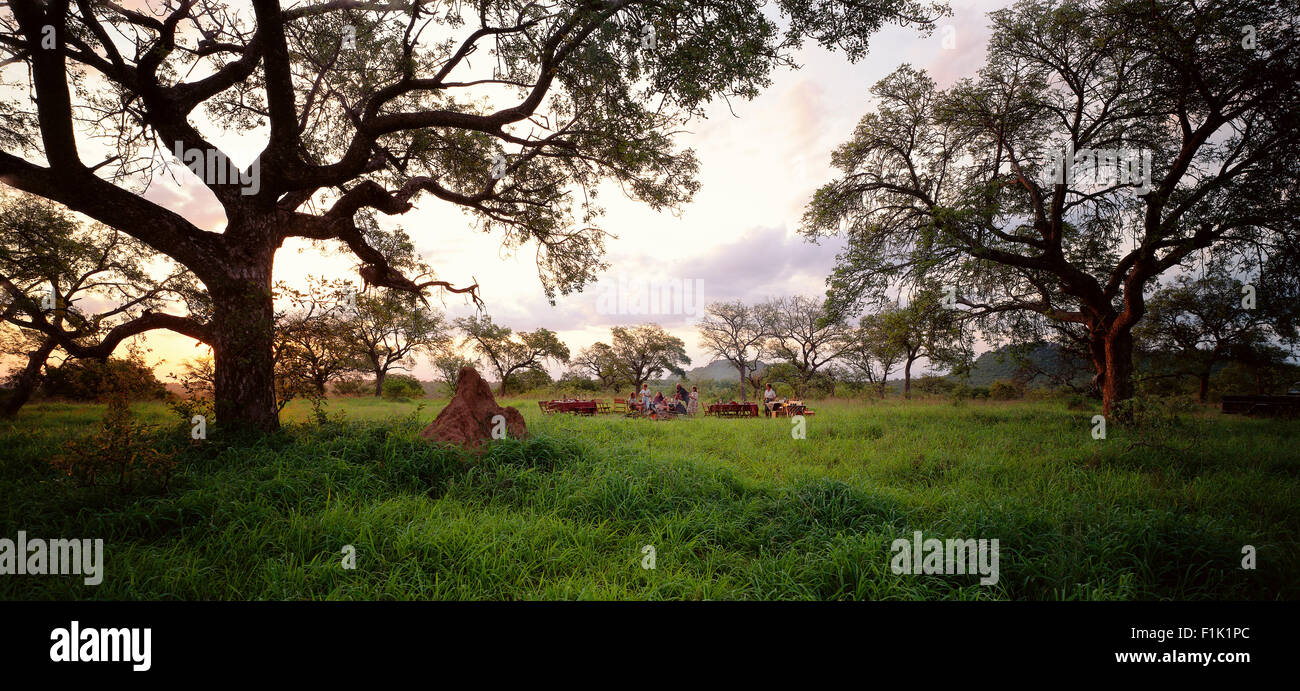 People in Field Having Picnic Bushveld, South Africa - Stock Image