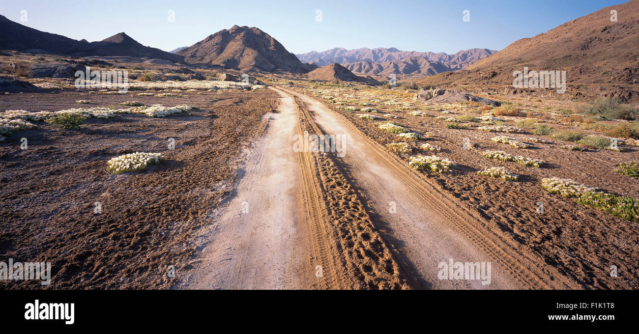 Dirt Road in Richtersveld National Park, Northern Cape, South Africa - Stock Image