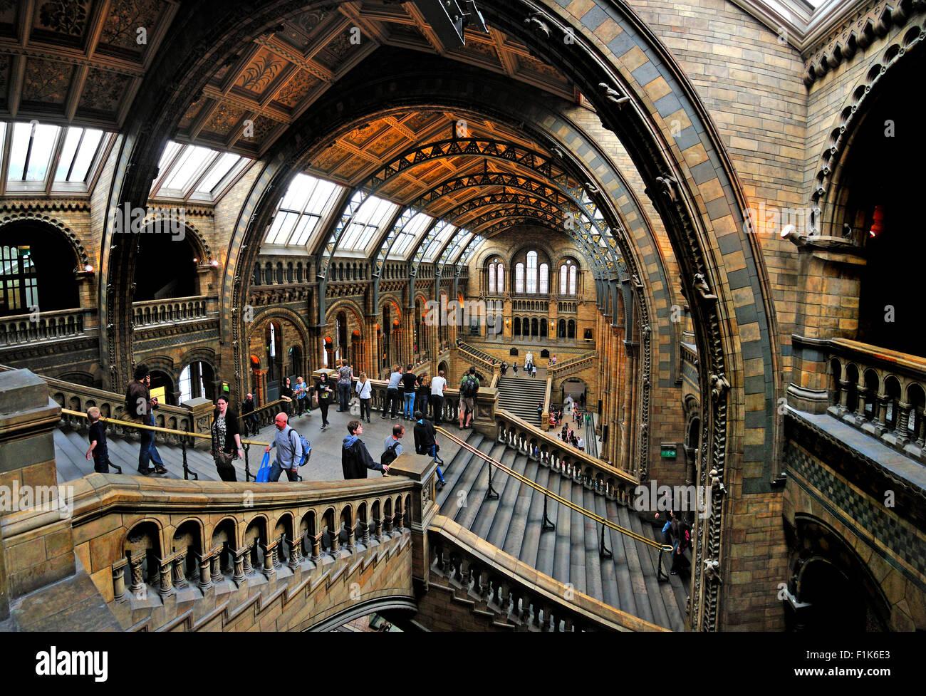 London, England, UK. Natural History Museum, Kensington. Interior - Stock Image
