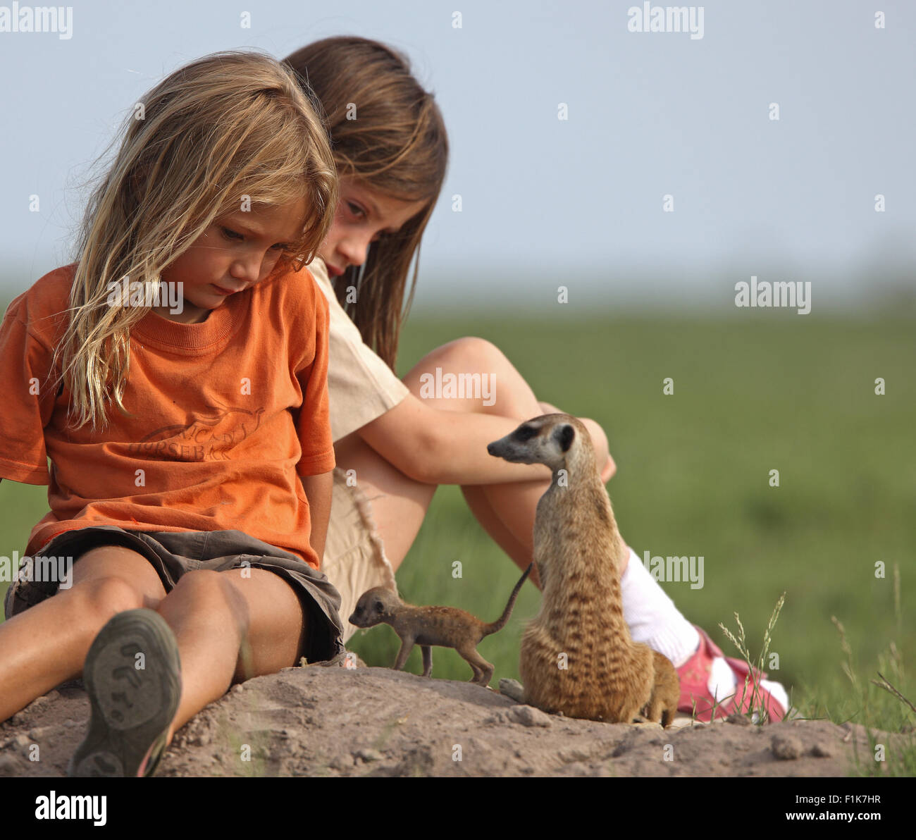 Girls playing with tame meerkat family in the wild - Stock Image