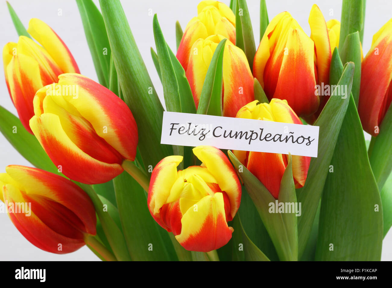 Feliz Cumpleanos Which Means Happy Birthday In Spanish Card With Colorful Tulips