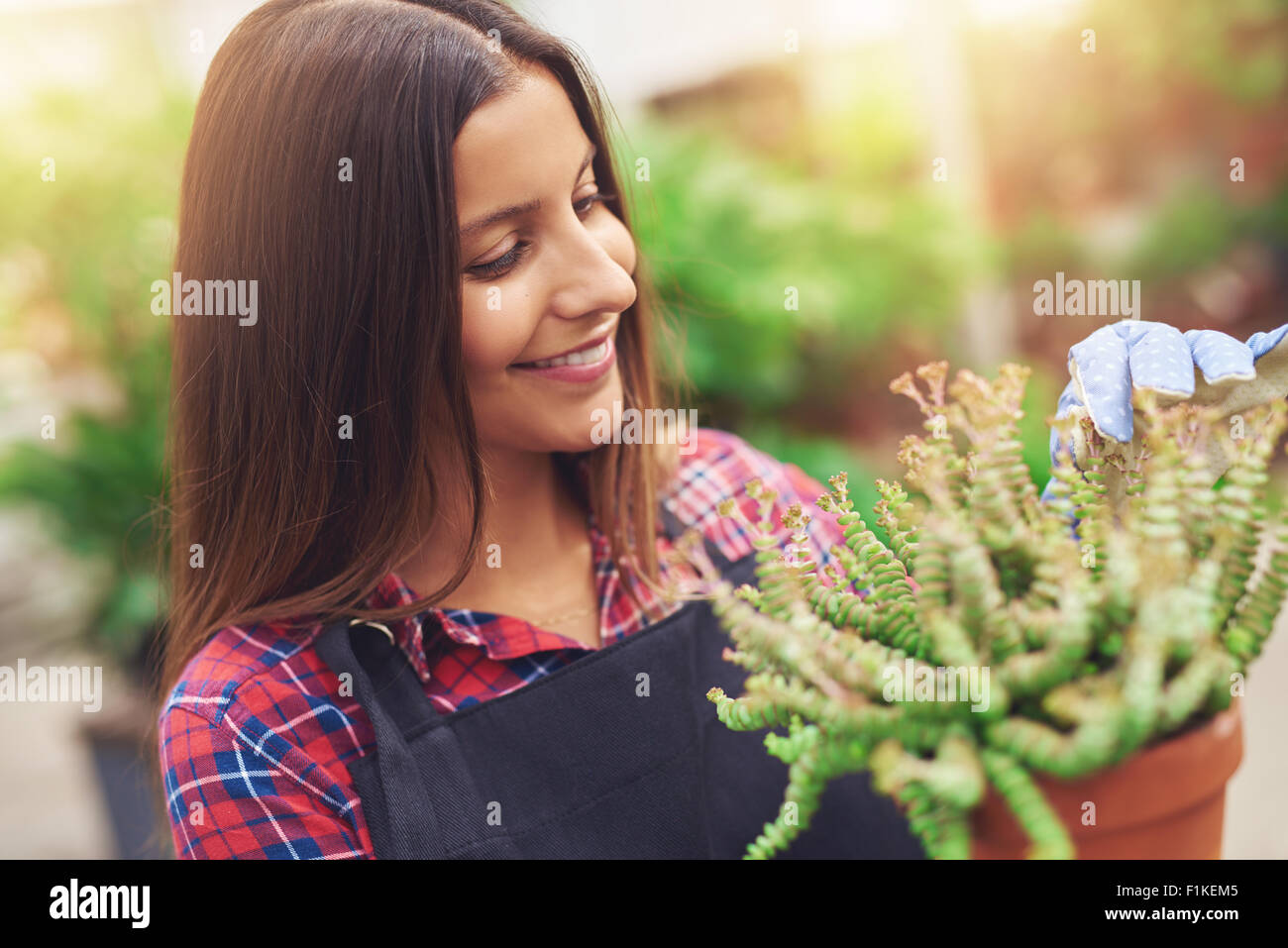 Pretty young horticulturalist working with potted plants in the greenhouse removing dead leaves as she readies them - Stock Image