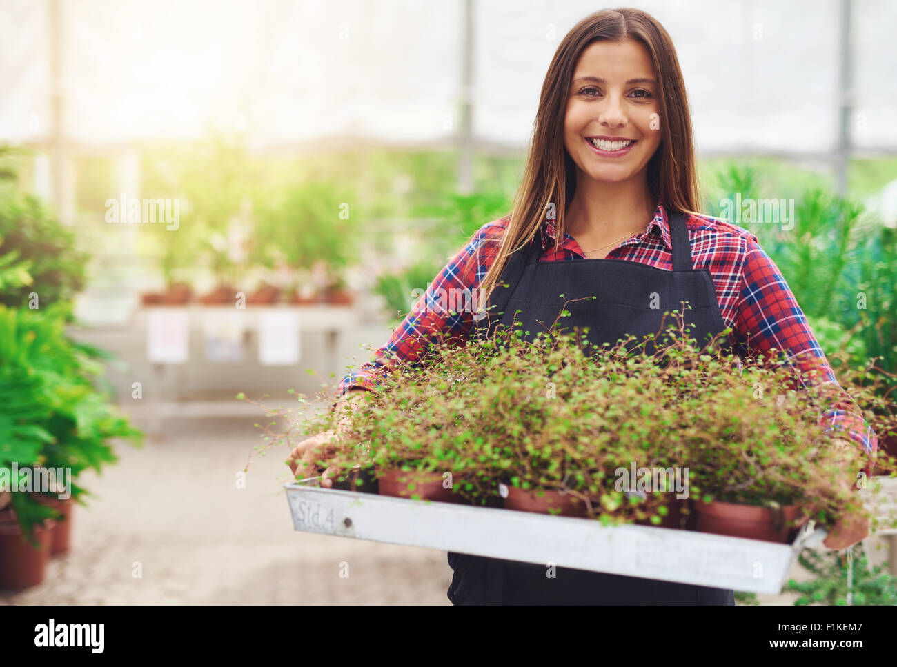 Smiling woman working in a commercial nursery selling plants to the public standing holding a tray of potted houseplants - Stock Image