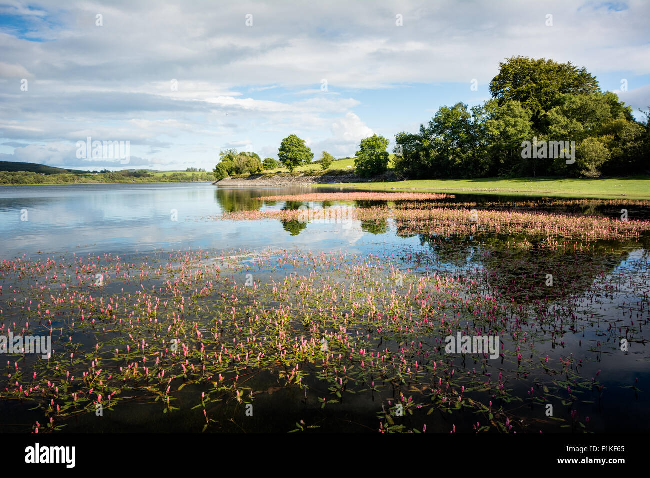 Sunny summer day at the lake - Stock Image