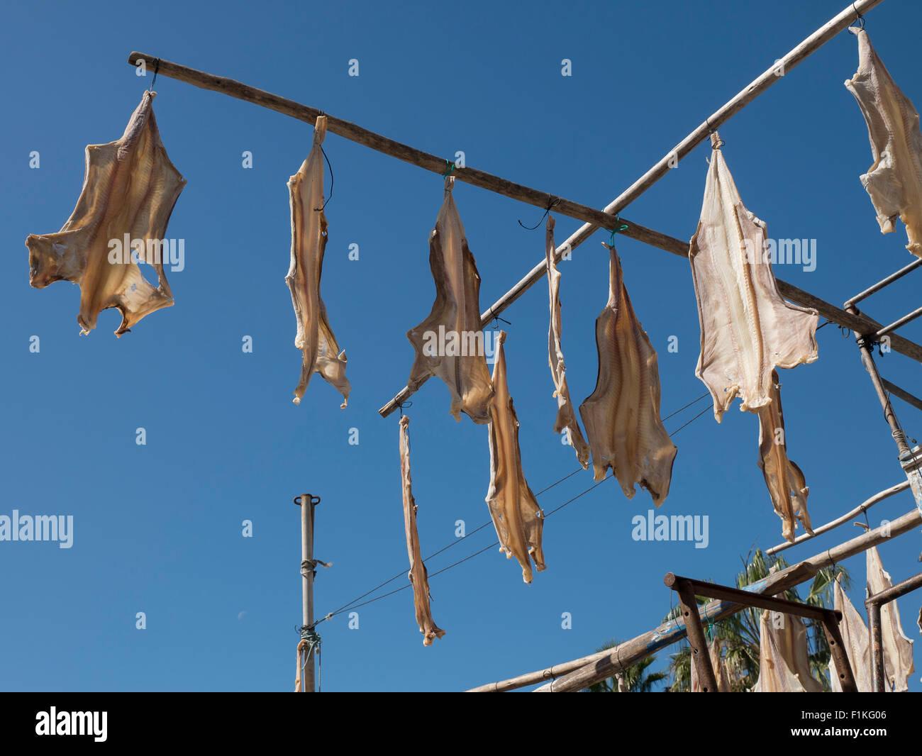 Drying Fish, Camara de Lobos, Madeira, Portugal - Stock Image