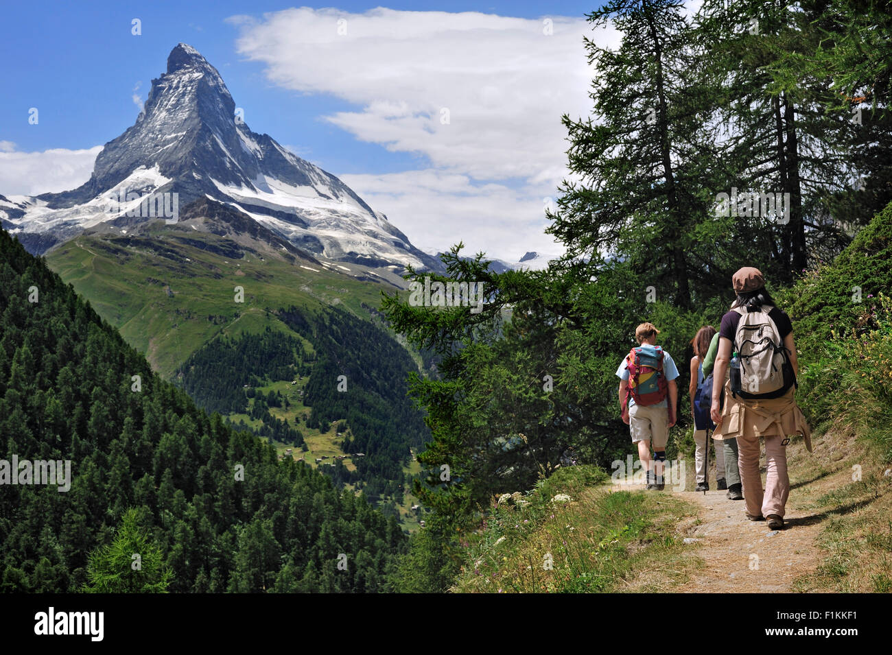 Hikers walking through larch forest with view over the Matterhorn mountain in the Swiss Alps, Valais / Wallis, Switzerland - Stock Image
