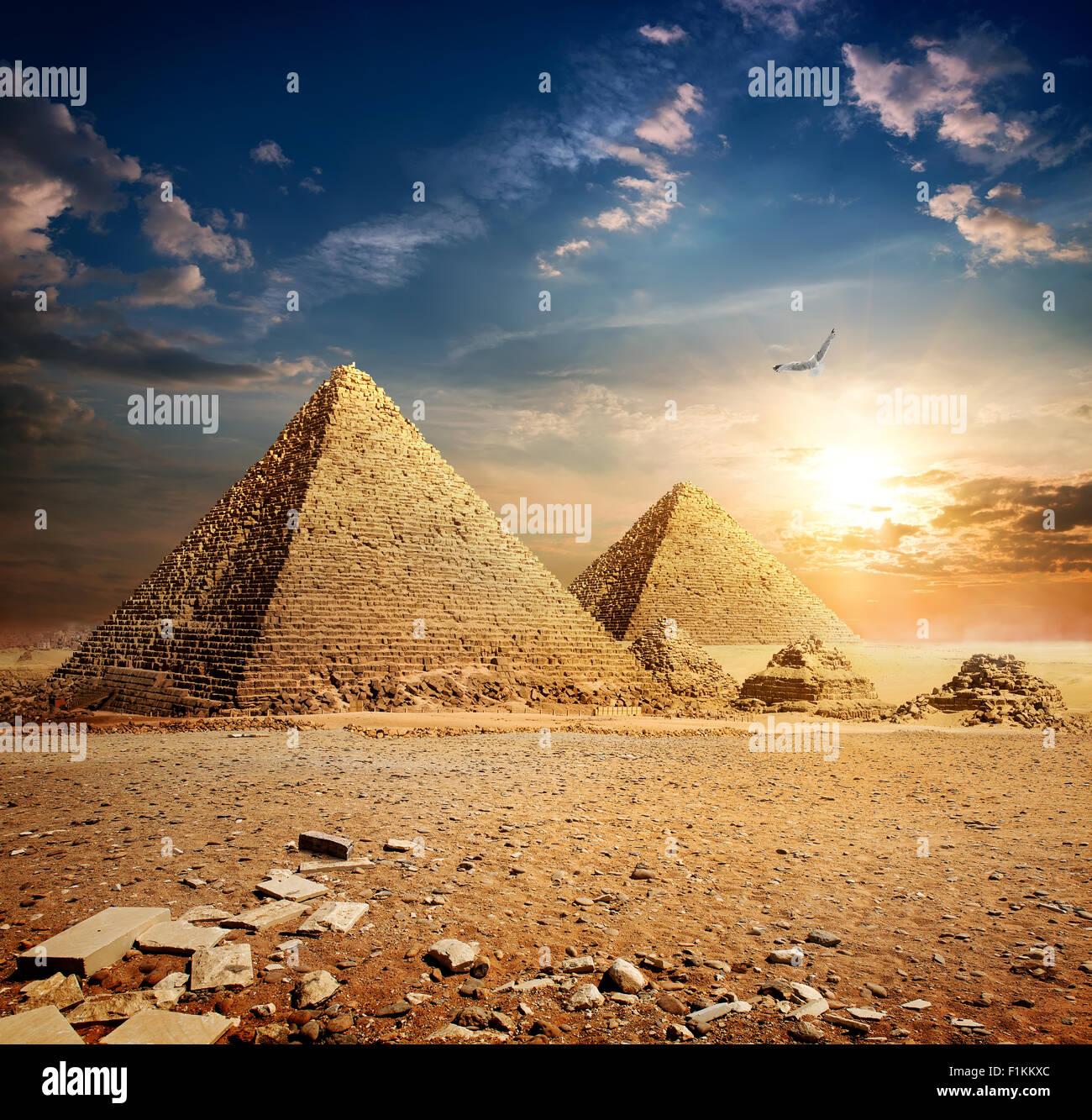 Big bird over pyramids at the sunset - Stock Image