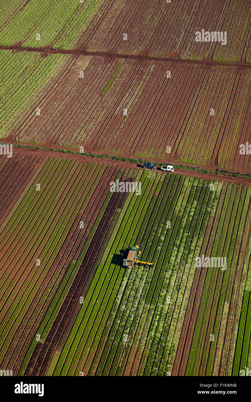 Pickers and tractor in market garden, Bombay Hills, South Auckland, North Island, New Zealand - aerial - Stock Image