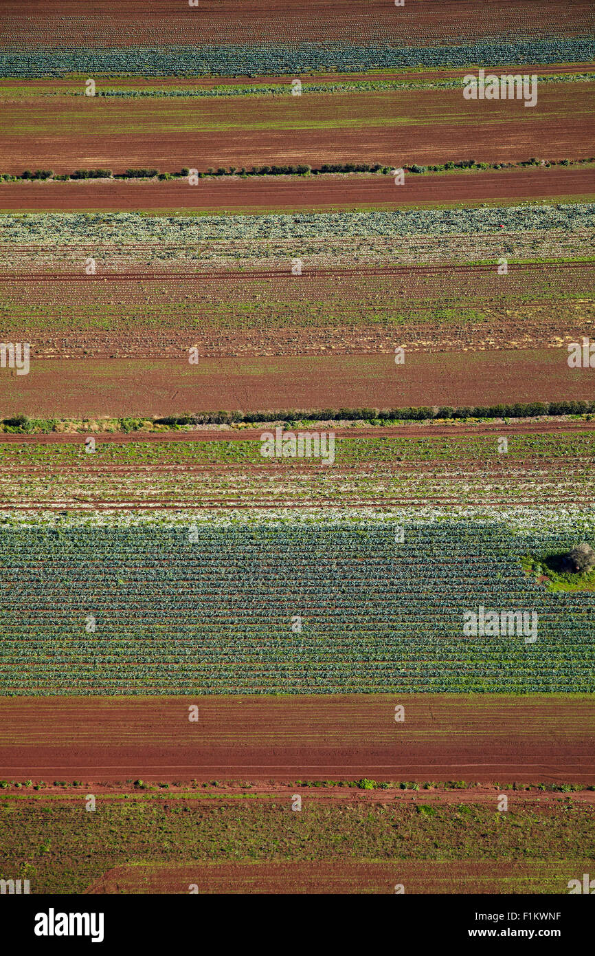 Market garden, Bombay Hills, South Auckland, North Island, New Zealand - aerial - Stock Image
