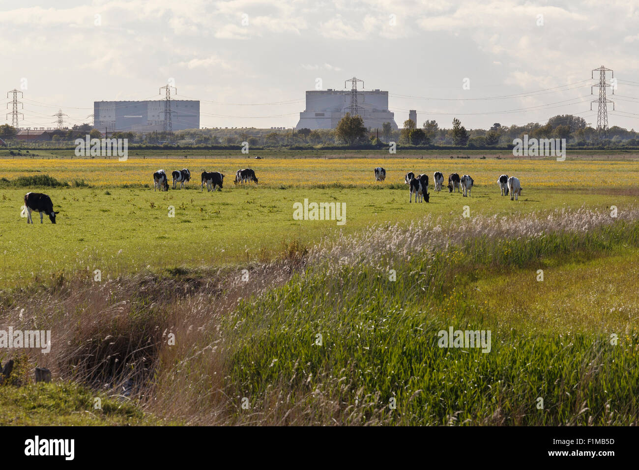 Hinkely Point nuclear power plant. A station to the left, B station to the right. From Steart salt marsh nature - Stock Image