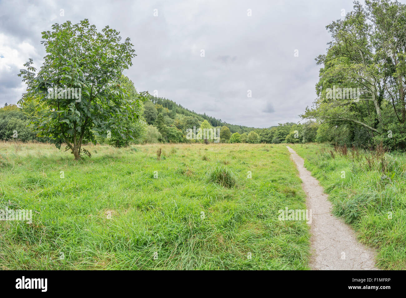 Fisheye landscape - municipal park area Lostwithiel. Stay on the right path metaphor. - Stock Image