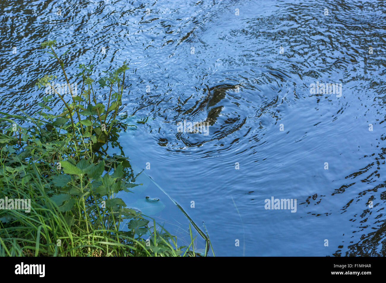 River Fowey, whirling waters close to bank. - Stock Image