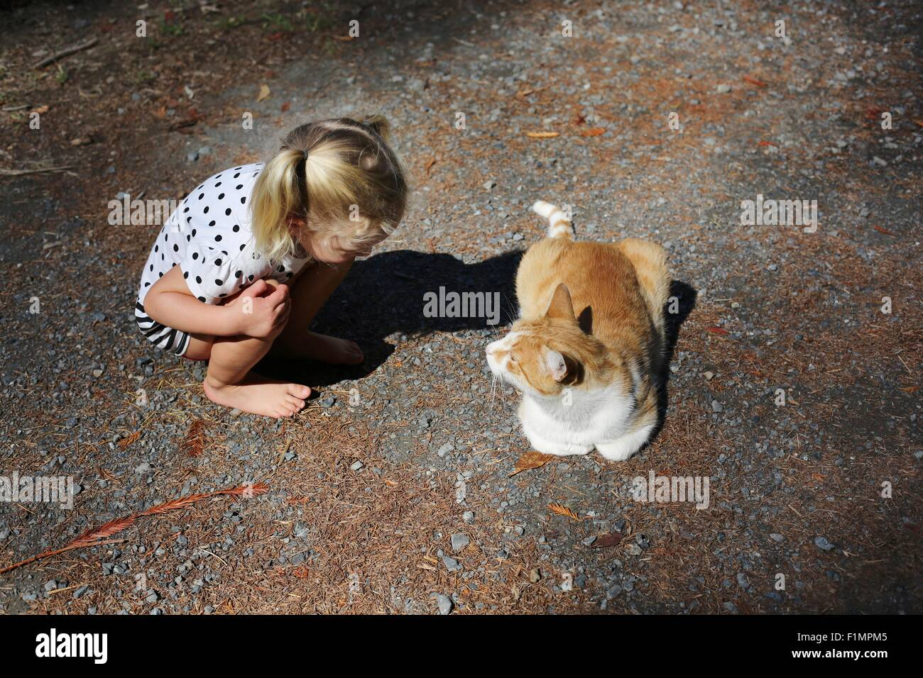A little girl crouched next to a cat. - Stock Image