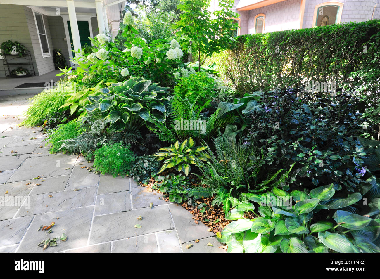 Shade garden of perennials, Connecticut - Stock Image