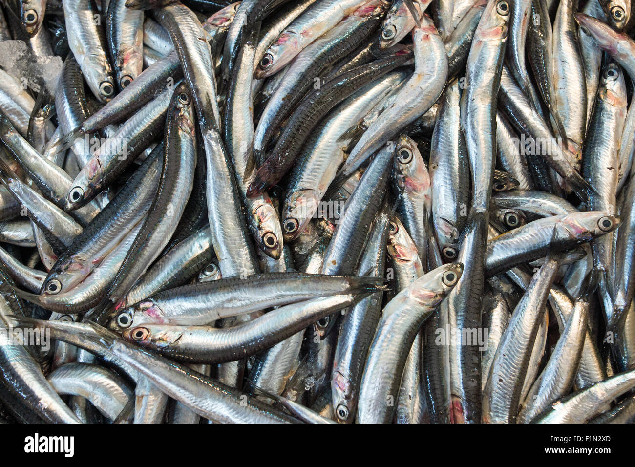Anchovies for sale on the fish market - Stock Image