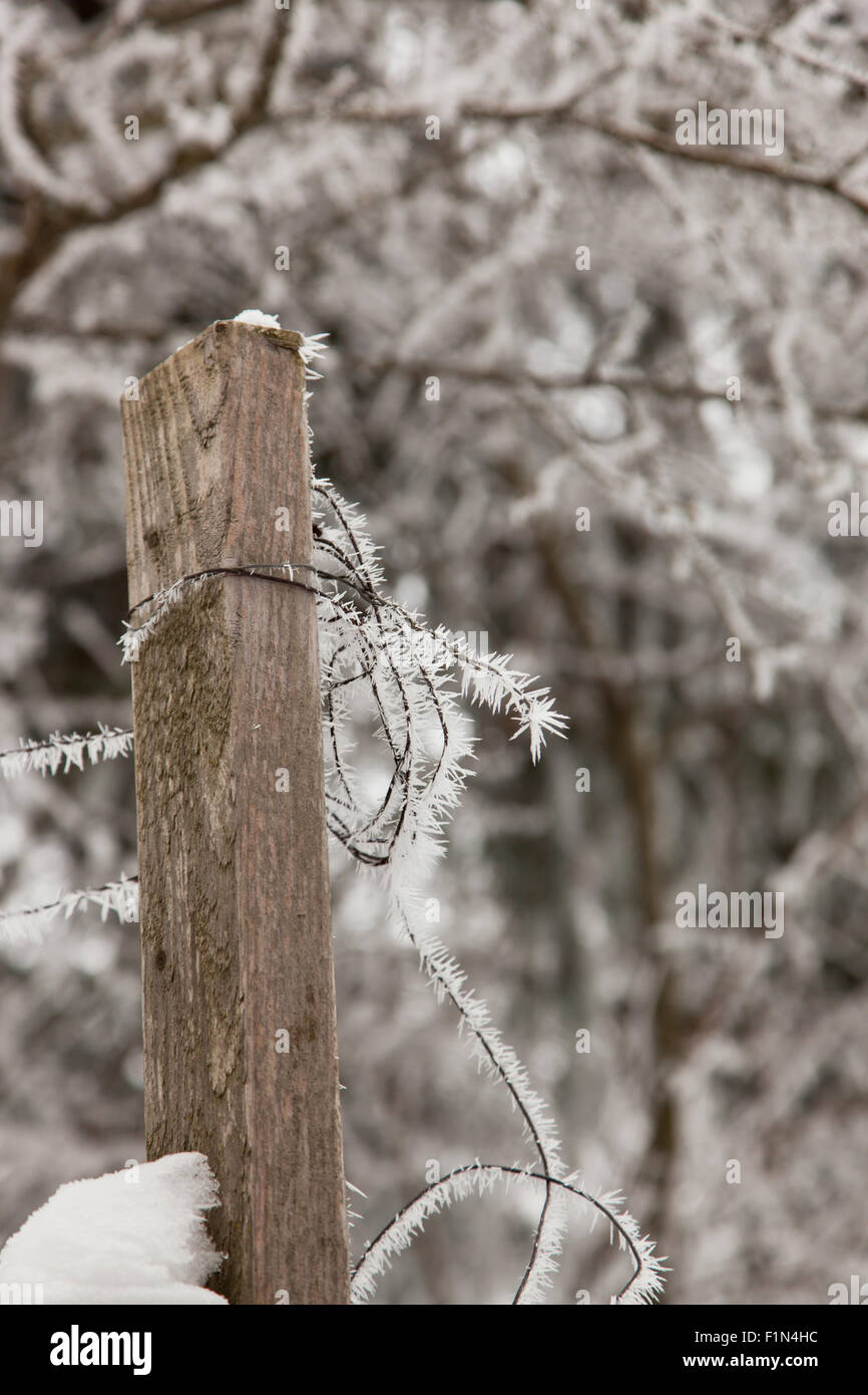 A old wooden post with fence wire covered in spiky ice wrapped around it in winter. - Stock Image