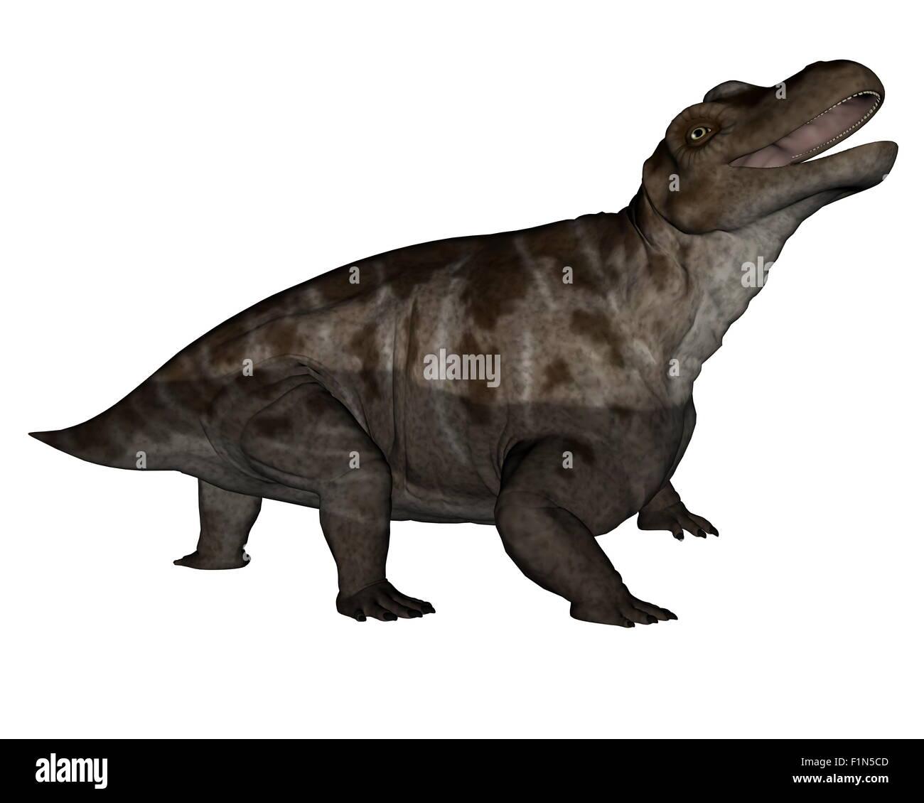 Keratocephalus dinosaur roaring isolated in white background - 3D render - Stock Image