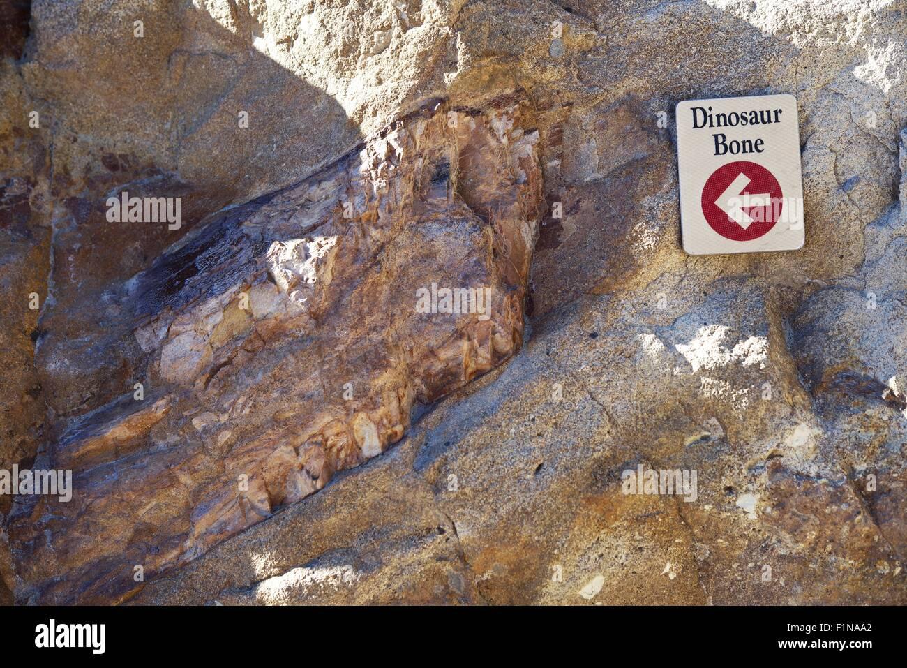 Dinosaur Bones Fossil in Colorado, United States. - Stock Image
