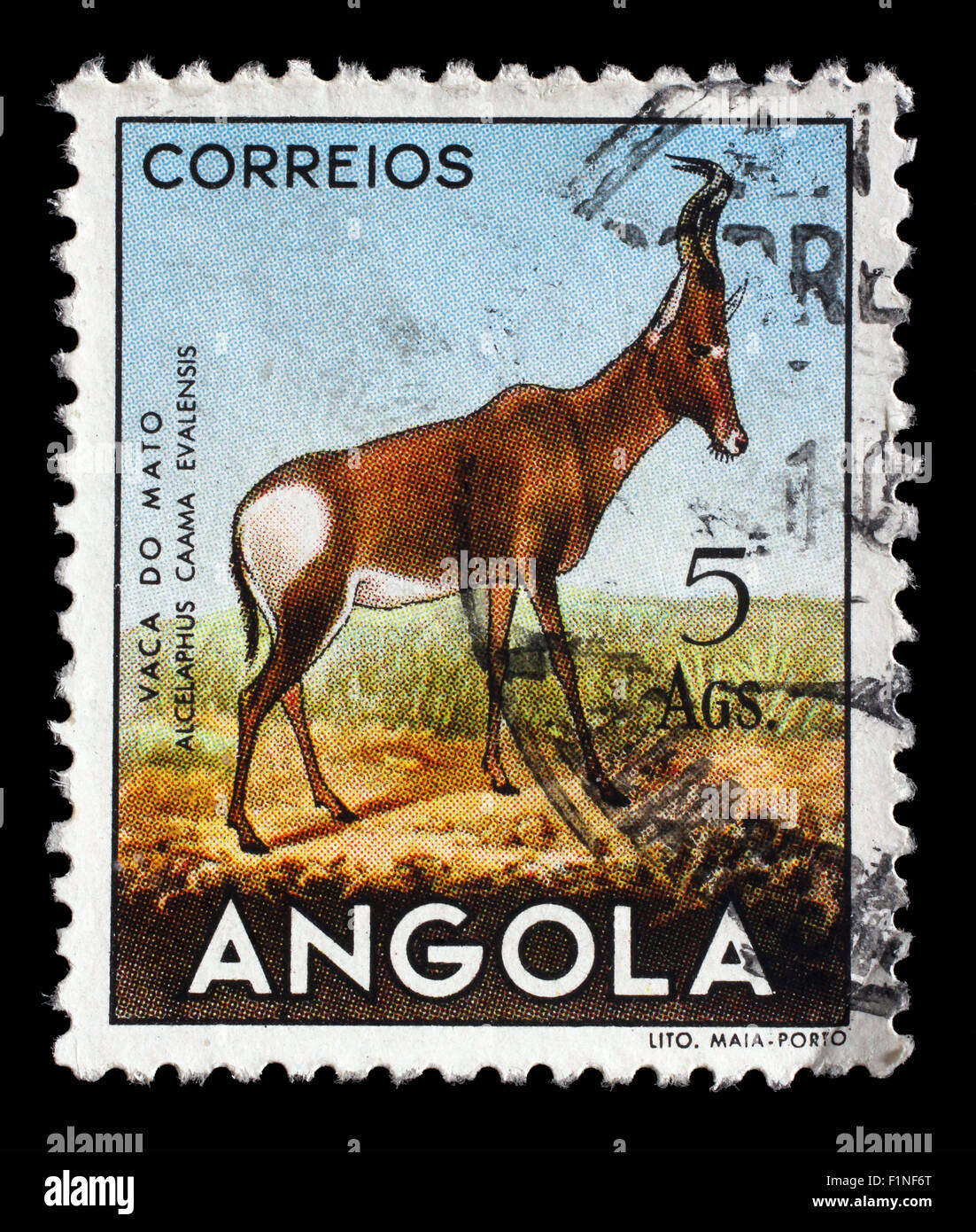Stamp printed in the Angola shows Red Hartebeest (Alcelaphus buselaphus caama), circa 1953. - Stock Image
