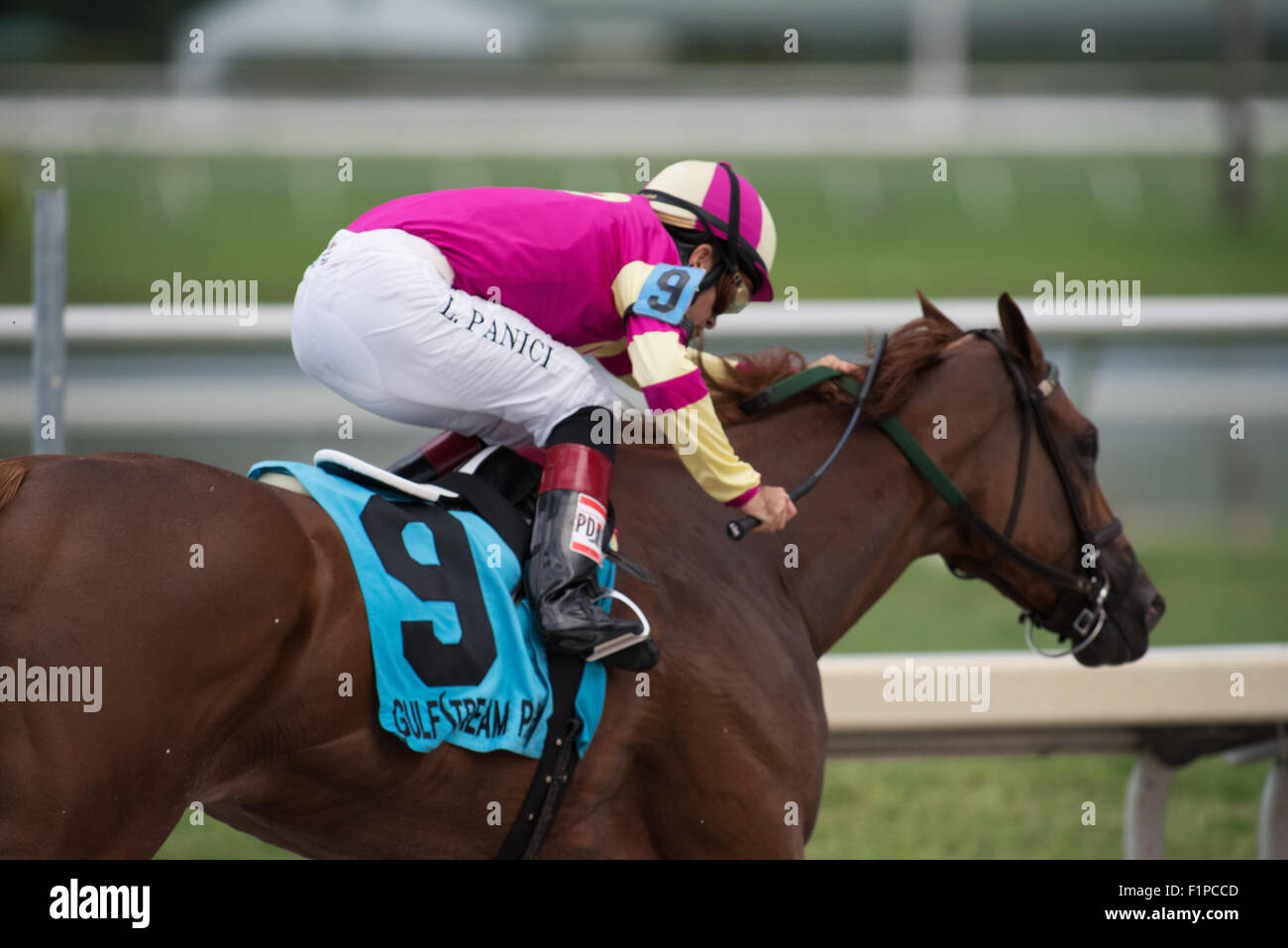 Horse and rider in race at Gulfstream Park, Florida - Stock Image
