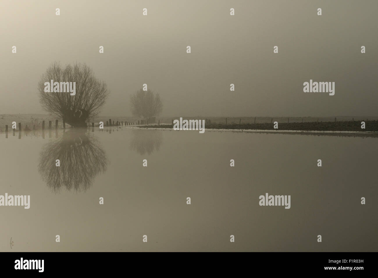 Flooded fields with pollard trees on a typical misty winter morning at Lower Rhine, North Rhine-Westphalia, Germany. - Stock Image