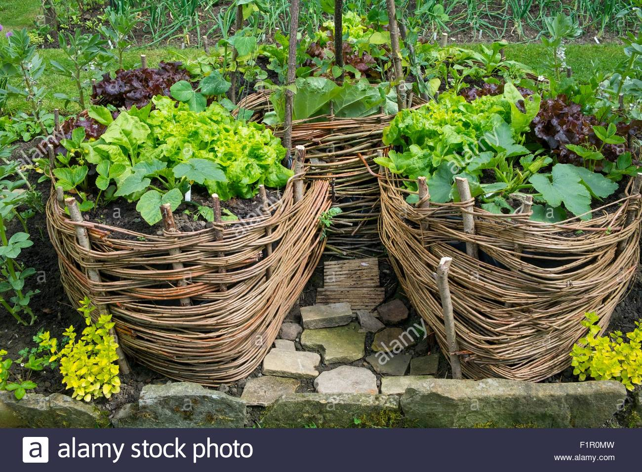 Raised \'Keyhole\' Garden constructed from wicker, planted with salad ...