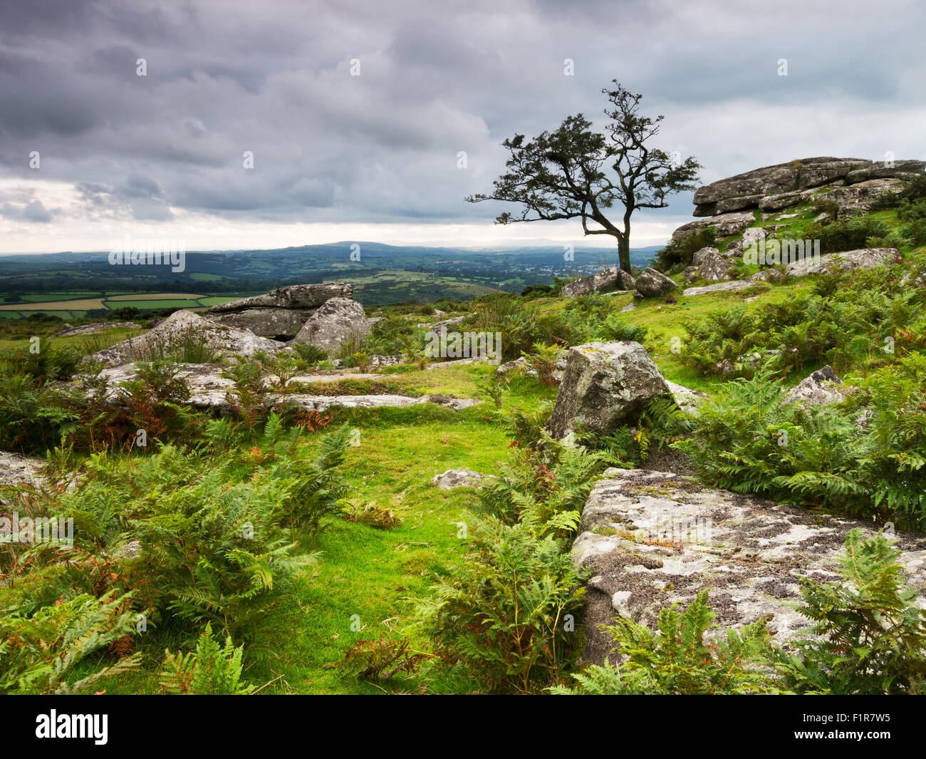 Wild, untamed Dartmoor. - Stock Image