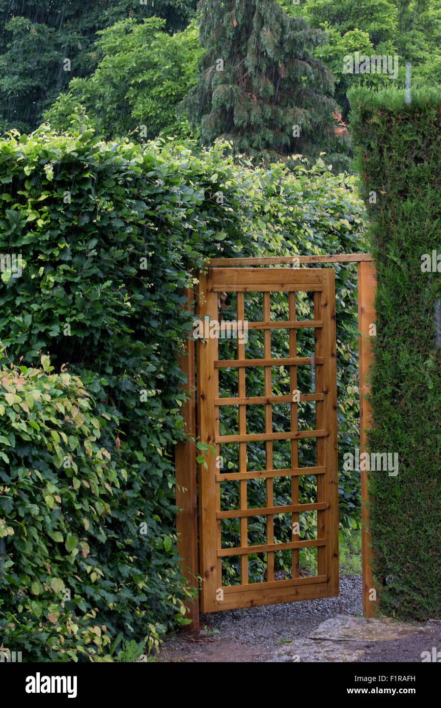 Wood garden gate with mesh pattern set among the hedges Stock Photo ...