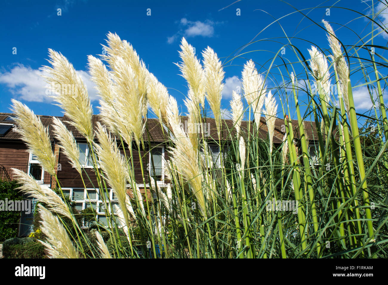 Net curtains and pampas grass signs of swinging suburbia - Stock Image