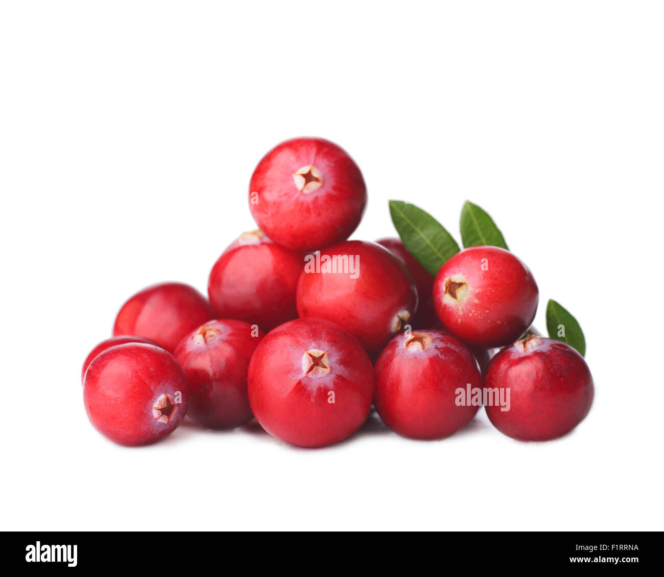 Wild cranberry with its leaves - Stock Image