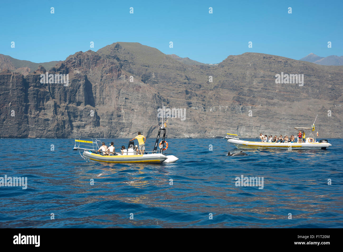 dolphin watching off the coast of Tenerife, Spain with tourists in boats on the sea - Stock Image