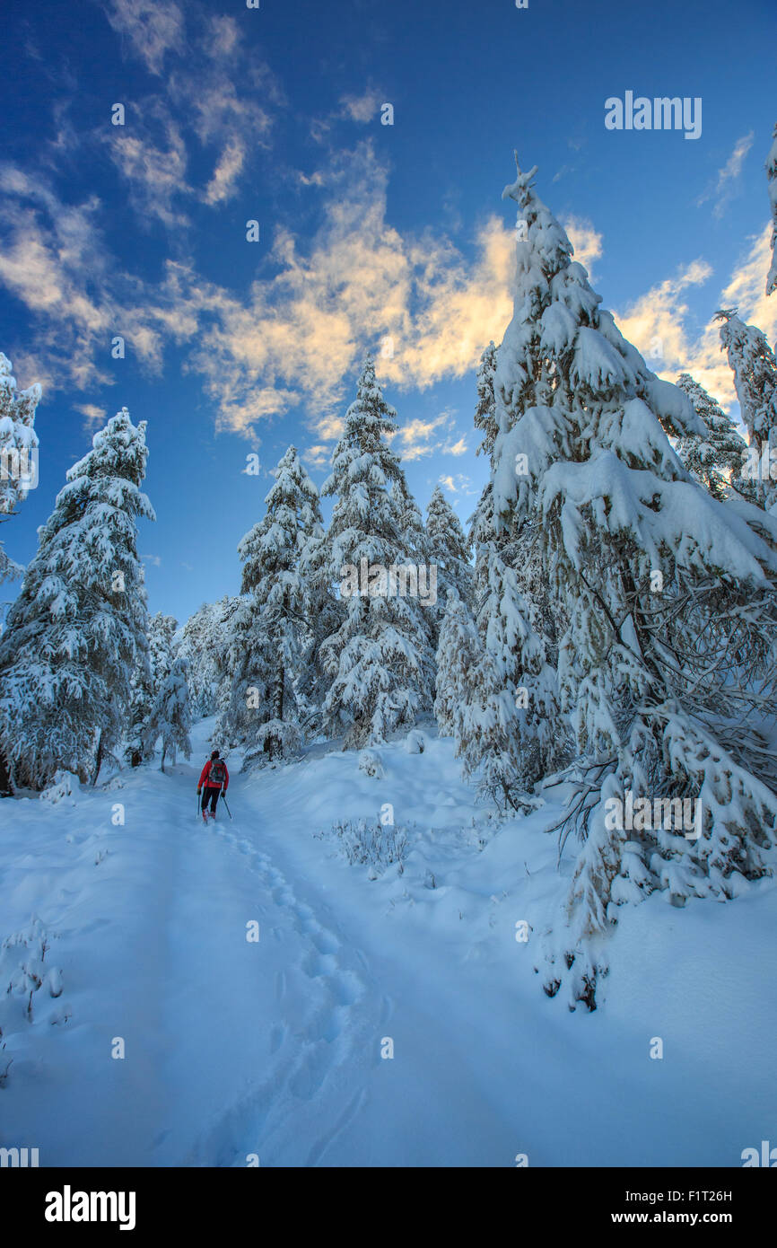 Hiker on snowshoes ventures in snowy woods, Casera Lake, Livrio Valley, Orobie Alps, Valtellina, Lombardy, Italy, Stock Photo