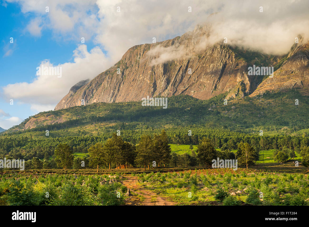 Mount Mulanje at sunset, Malawi, Africa - Stock Image