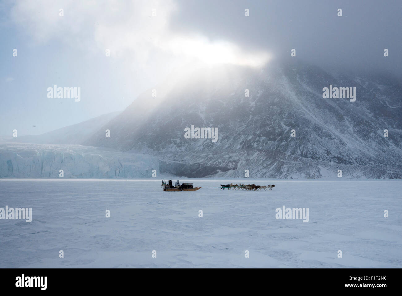 Inuit hunter and his dog team travelling on the sea ice, Greenland, Denmark, Polar Regions - Stock Image